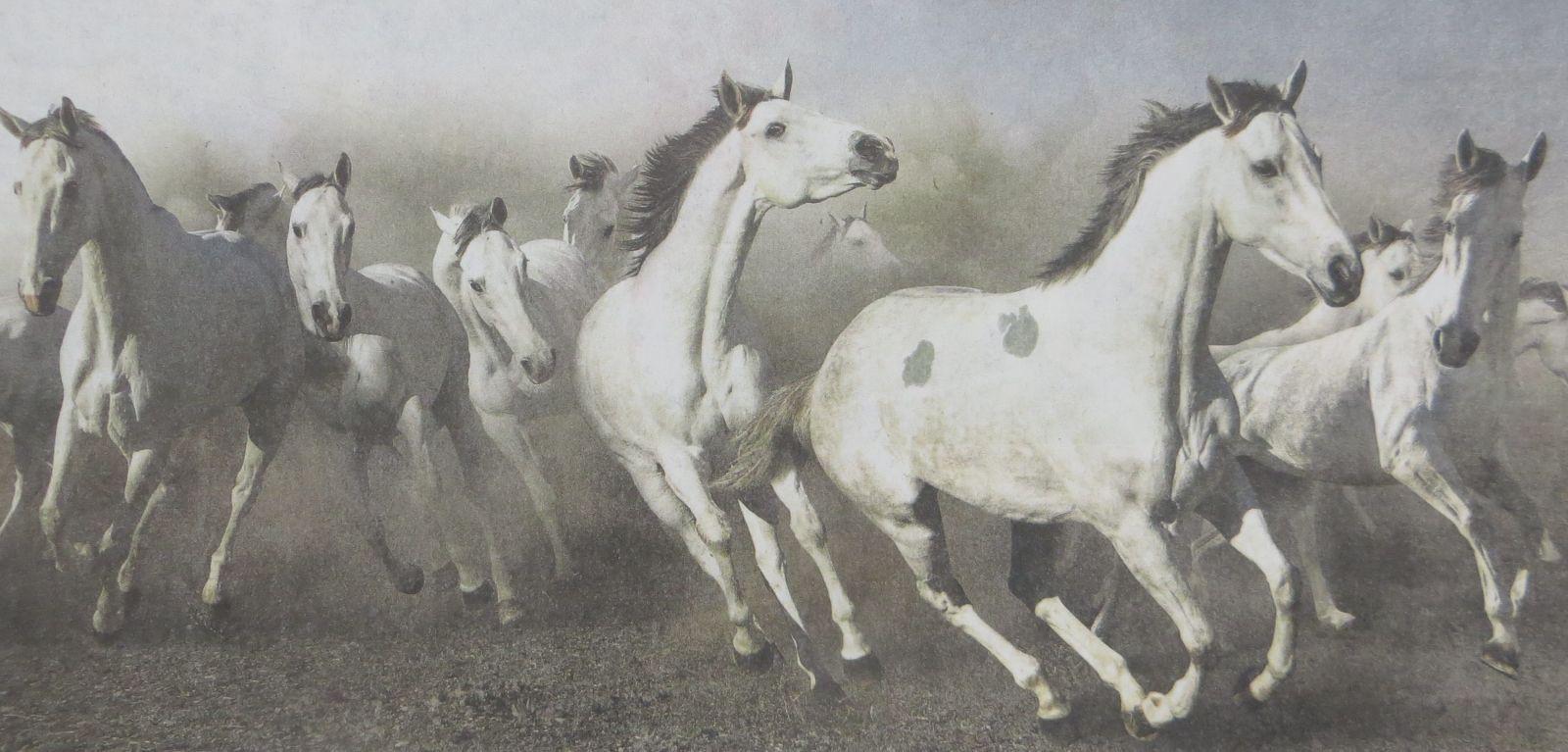 Pferd schlachten – wie geht das? Olympia-Reiterin Anika Schleu nicht schlau - featured image